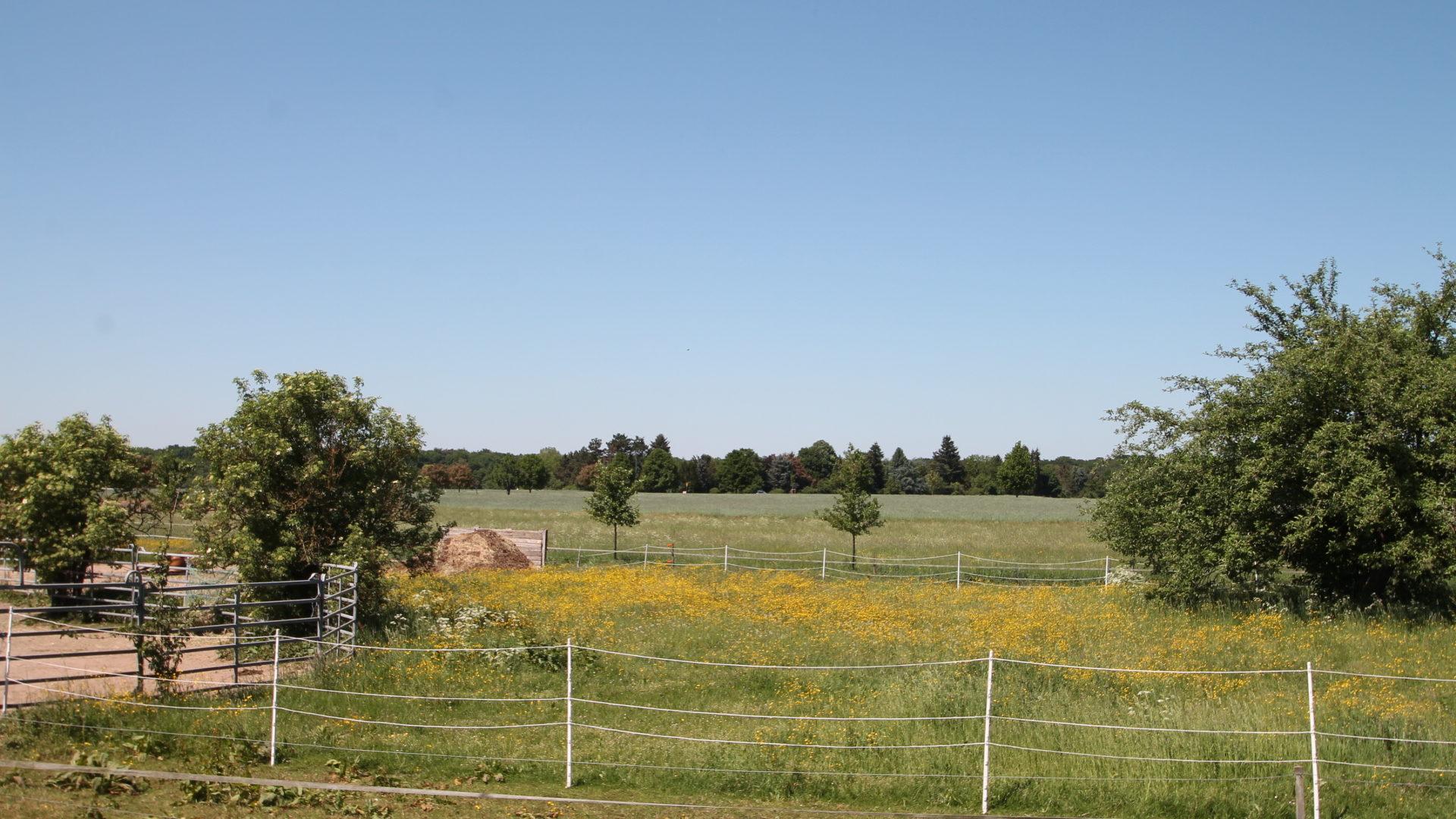 Exklusives Wohnen in Feldrandlage mit großem Gartenanteil *Provisionsfrei & Schlüsselfertig* 1